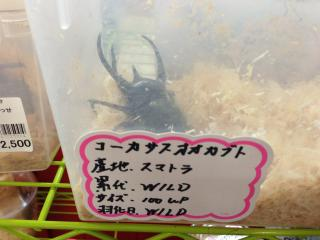 よりっせ昆虫 ③
