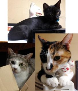 141031_cat01.jpg
