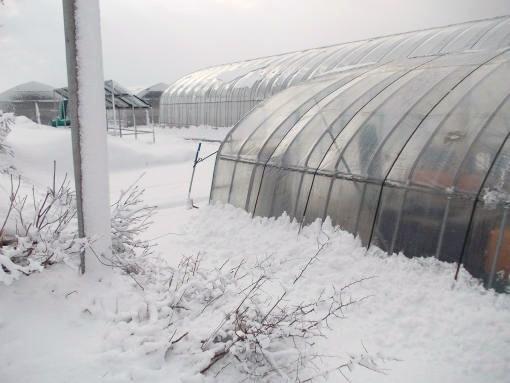 20130412_嫌がらせの雪