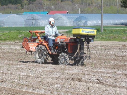 20130526_アスパラ畑に肥料を撒くの図