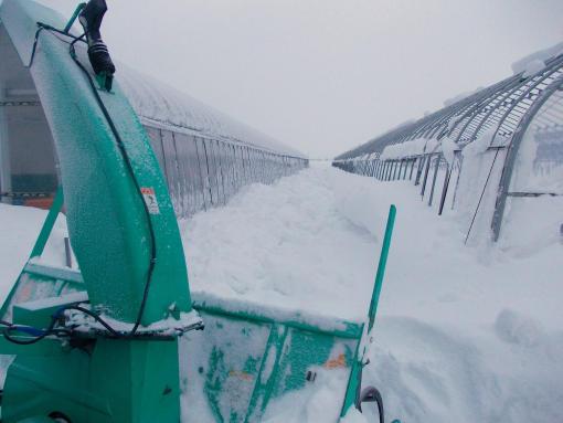 20140114_南側の雪を飛ばす