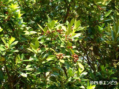20130429 所沢航空公園 02
