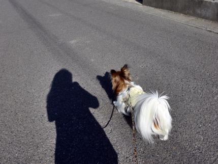 術後初のお散歩♪1