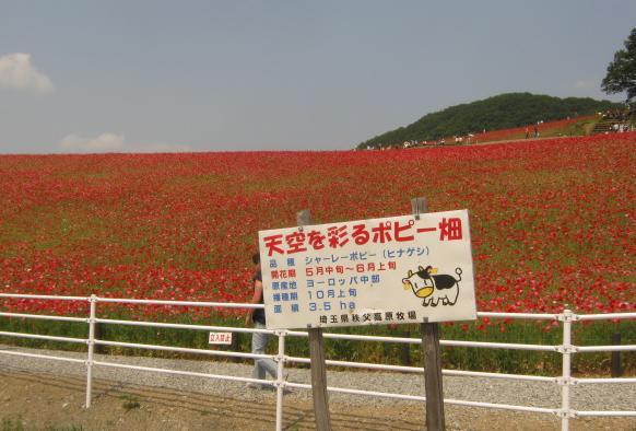 poppy130526-101.jpg