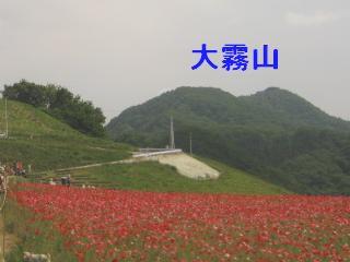 poppy130526-205.jpg