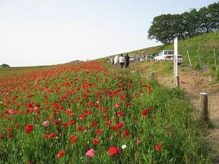 poppy130526-208.jpg