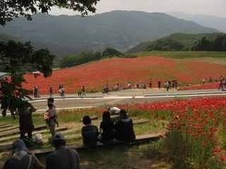 poppy130526-209.jpg
