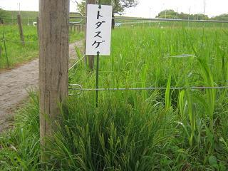 sakurasou130421-211.jpg