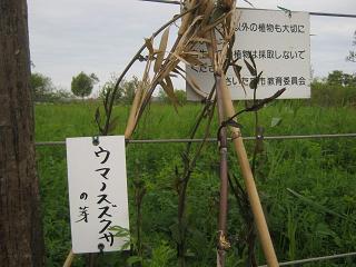 sakurasou130421-213.jpg