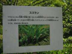 shokubutu130504-112.jpg