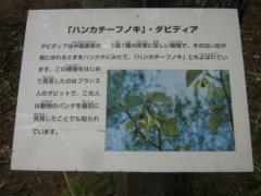 shokubutu130504-113.jpg