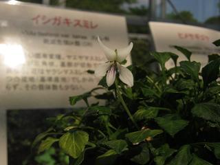 shokubutu130504-238.jpg