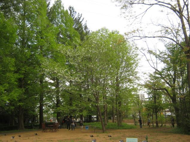 shokubutu130504-249.jpg