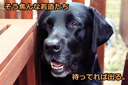s-IMG_1195_20130505113756.jpg