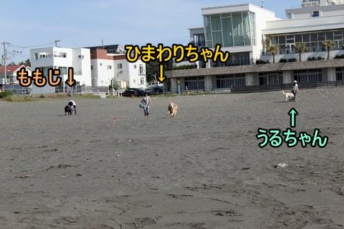s-IMG_1591.jpg