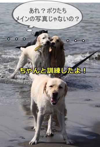 s-IMG_1696_20130604225104.jpg