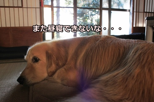s-IMG_8704_201310162242490d5.jpg