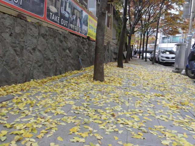2013年11月17日 近所の歩道の落ち葉