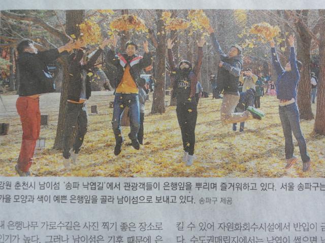 2013年11月22日 東亜日報 落ち葉の再利用