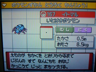 色 イトマル図鑑