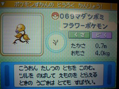 色 マダツボミ図鑑