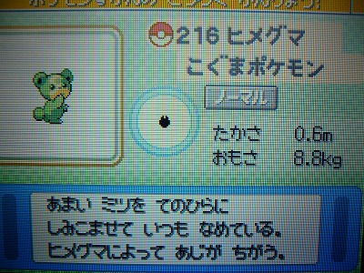 色 ヒメグマ図鑑