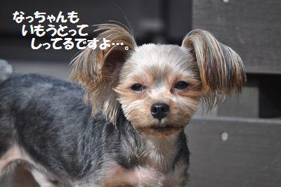 DSC_0004_201312161918013b3.jpg