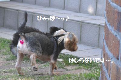 DSC_0144_20131223210430eb2.jpg
