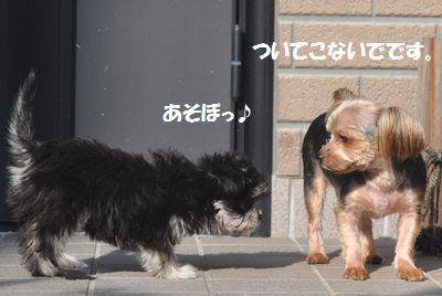 DSC_0154_20131223210431ae4.jpg
