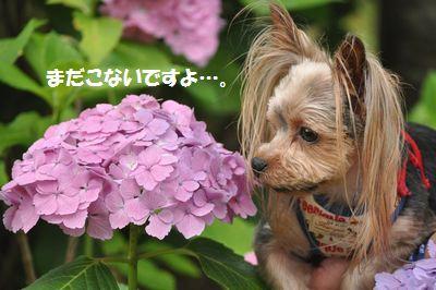 DSC_0441_20130630130034.jpg