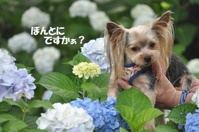 DSC_0459_20130630130035.jpg