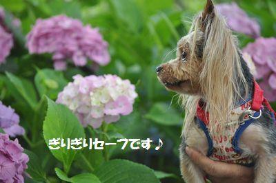 DSC_0578_20130630130123.jpg