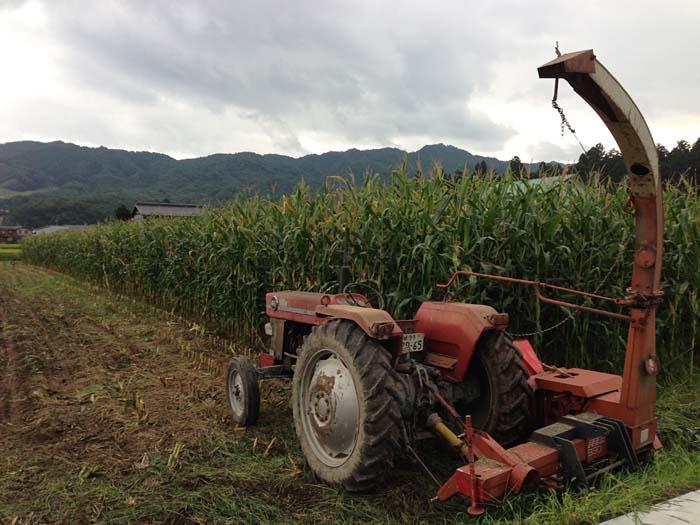 収穫 デントコーン 2013