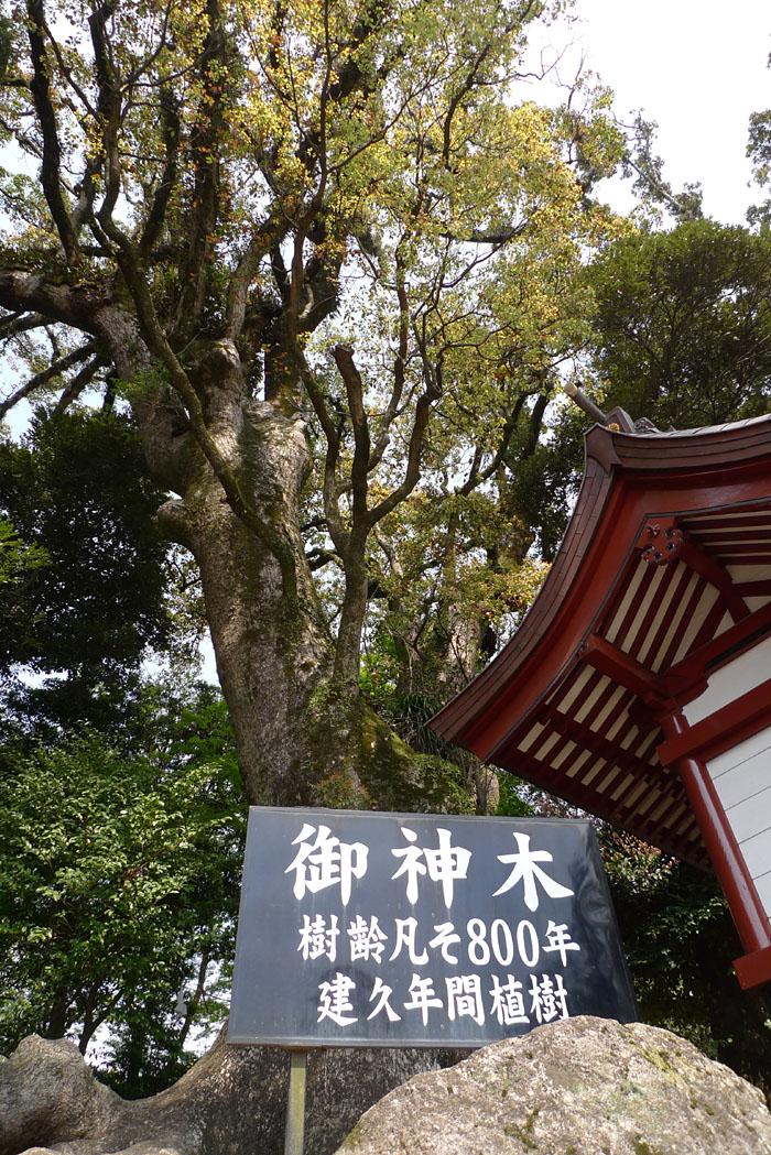 鹿児島神宮 4