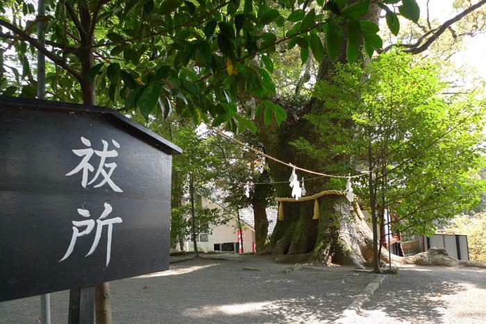 鹿児島神宮 10