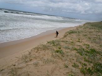 浜辺で調べる2