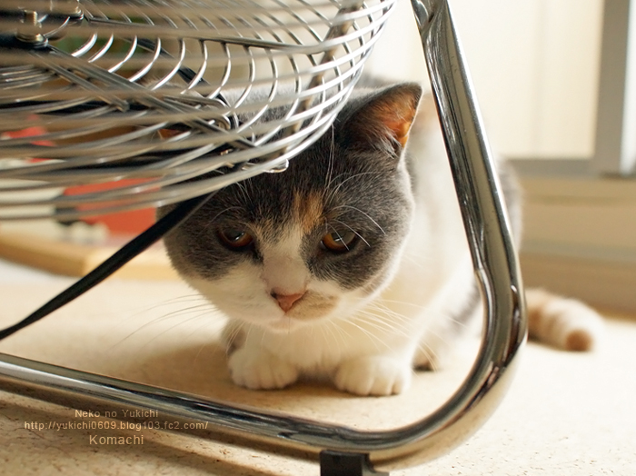 猫と扇風機