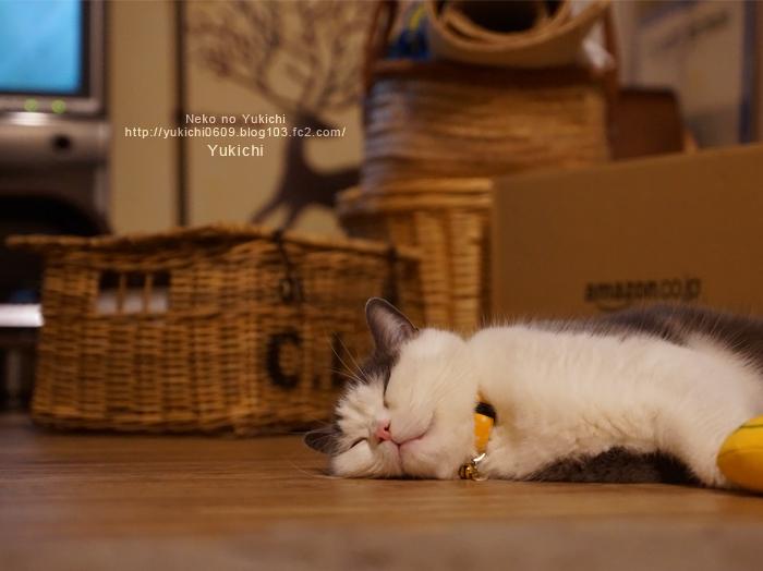 猫のために床張り