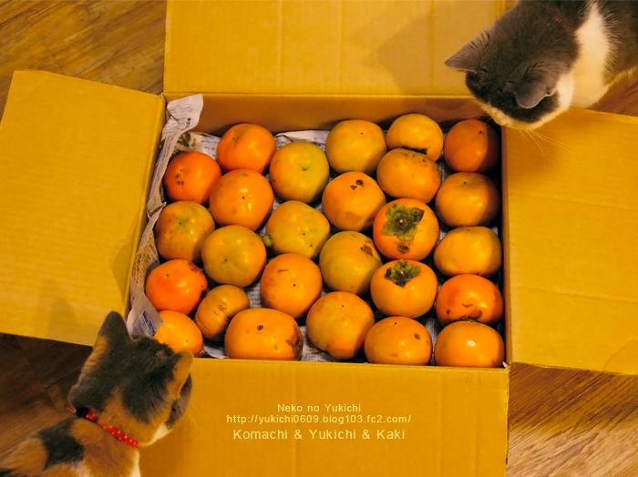 柿とゆきちとこまち