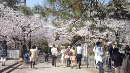 桜夙川 花見客