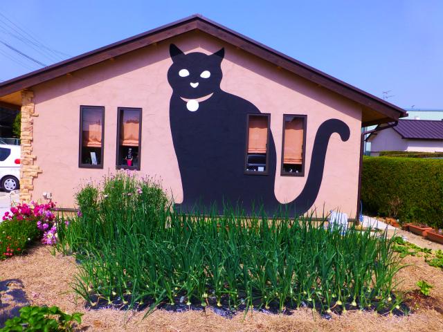 猫の散歩道(25年4月19日)