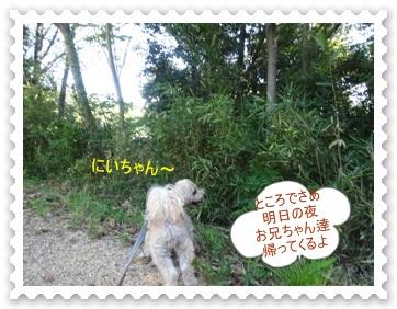 DSC00268.jpg
