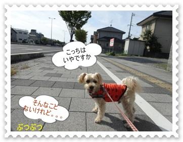 DSC00833.jpg