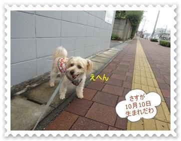 DSC01080.jpg