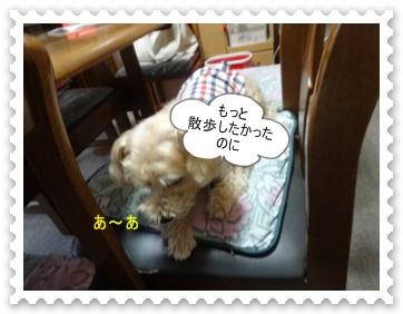 DSC01212.jpg