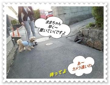 DSC_0528.jpg