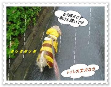 IMGP0038_20130627010103.jpg
