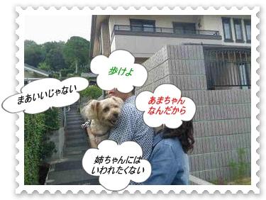 IMGP0269_20130701072100.jpg