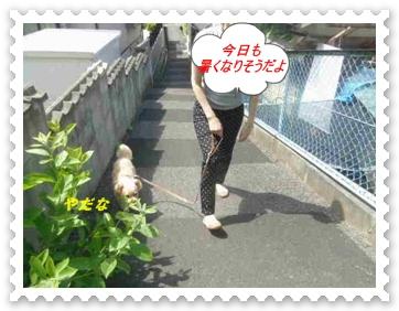 IMGP0534.jpg