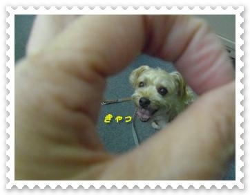 IMGP0727_20130712004858.jpg